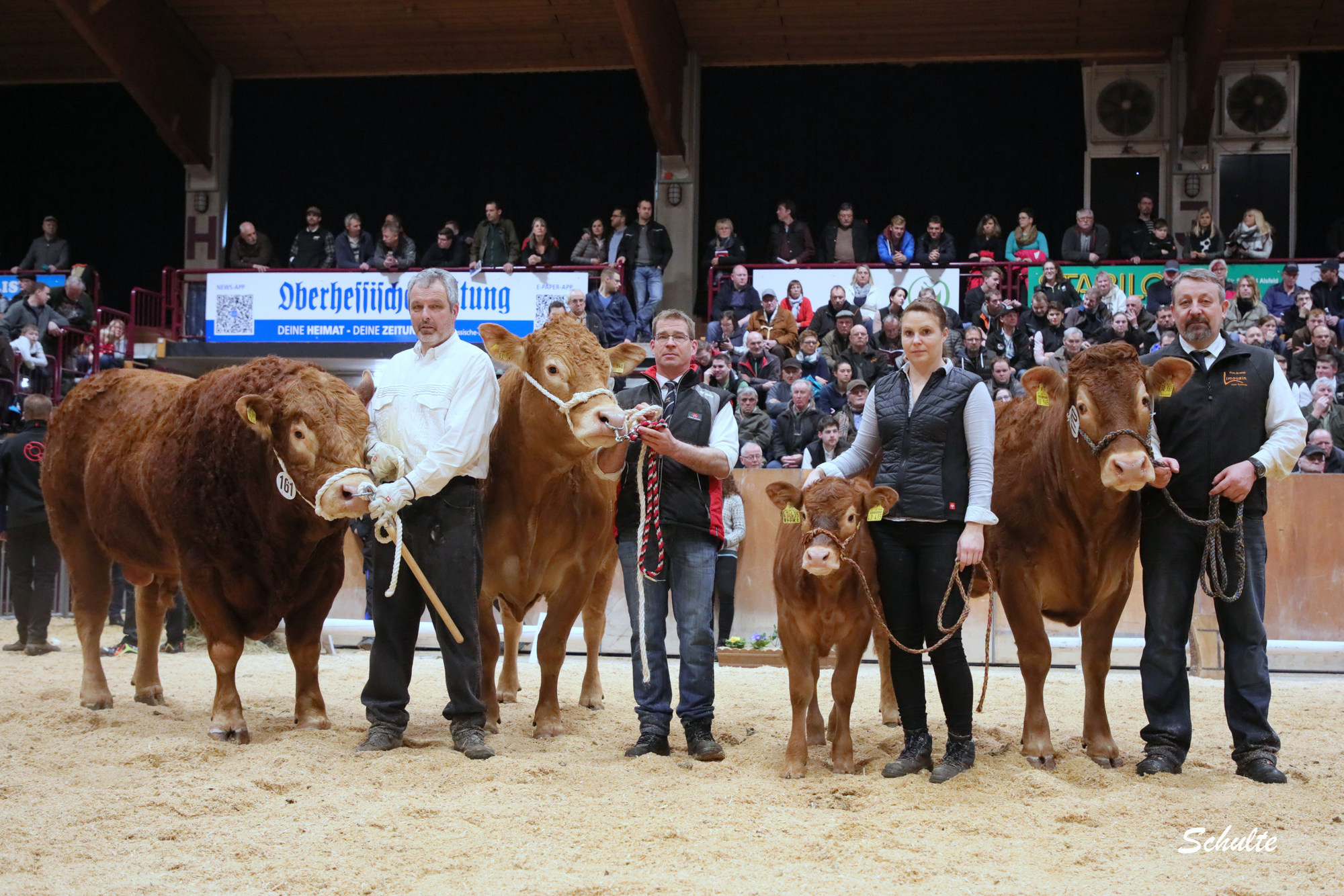 371 Sieger Limousin
